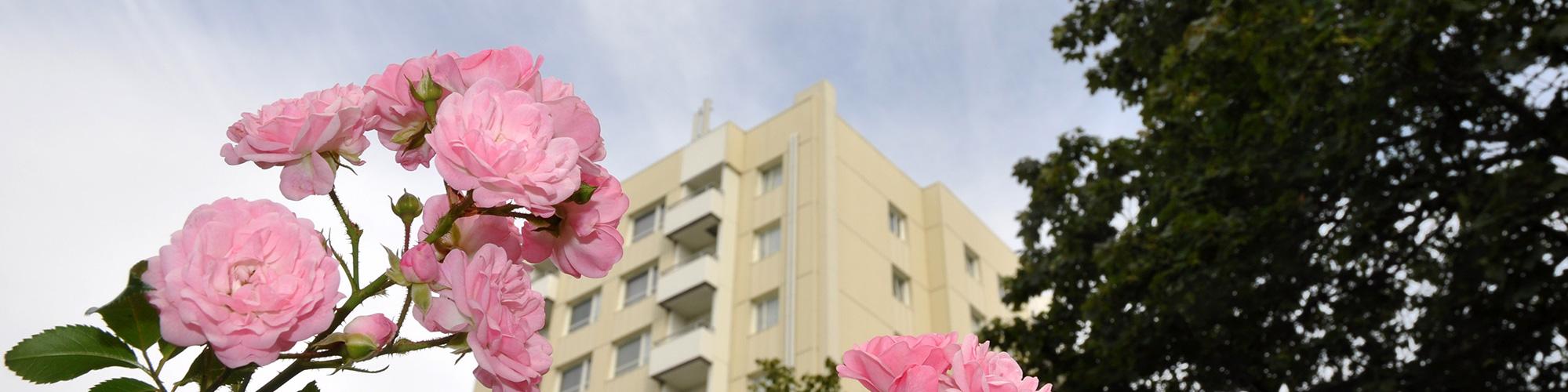 Tresson Balkong renoverade 191 balkonger på 5 punkthus åt brf Höstfibblan i Täby. Entreprenaden pågick mellan 2017-18.